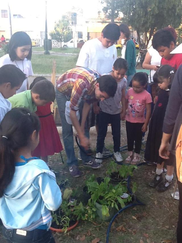 Plantando coditos y plántulas
